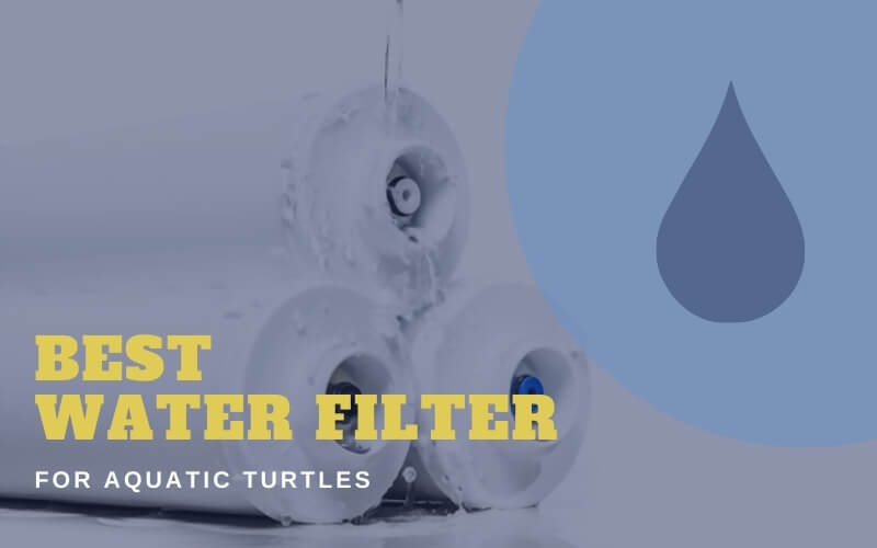 Water Filter For Aquatic Turtles